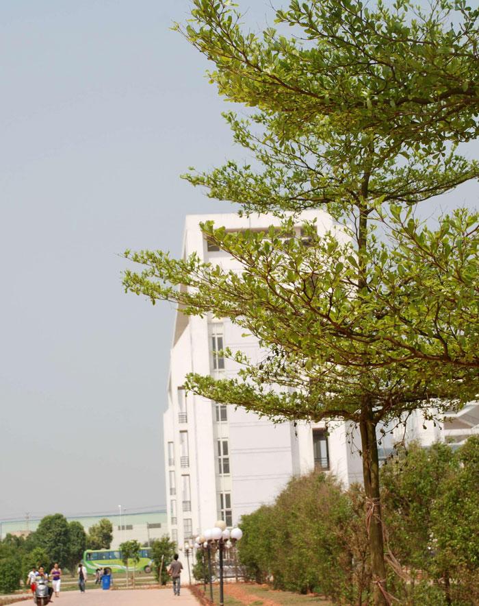 丛林教学楼